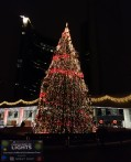 2014 Jan 04 - Toronto's Official Christmas Tree