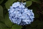 June 10 - Shinjuku Gyoen National Garden09