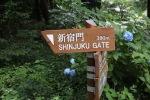June 10 - Shinjuku Gyoen National Garden10