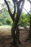 June 10 - Shinjuku Gyoen National Garden101