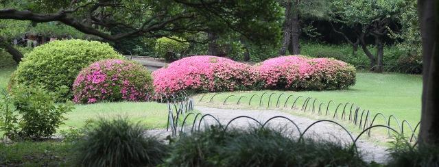June 10 - Shinjuku Gyoen National Garden14cropped