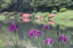 June 10 - Shinjuku Gyoen National Garden23