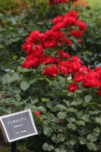 June 10 - Shinjuku Gyoen National Garden78