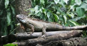 2014 May 19 - Zoo Negara08