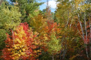 2014 Sept 25 - Raven Pines3